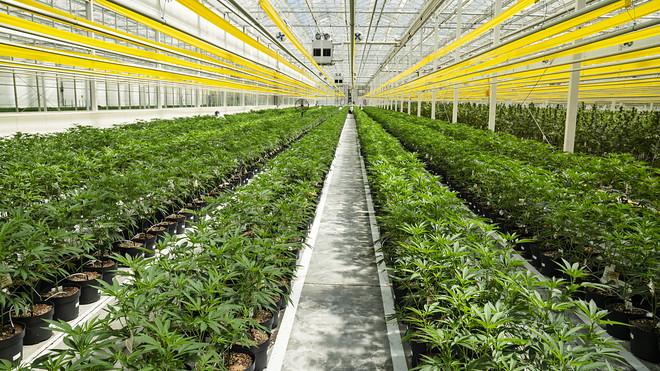 Marihuanové akcie